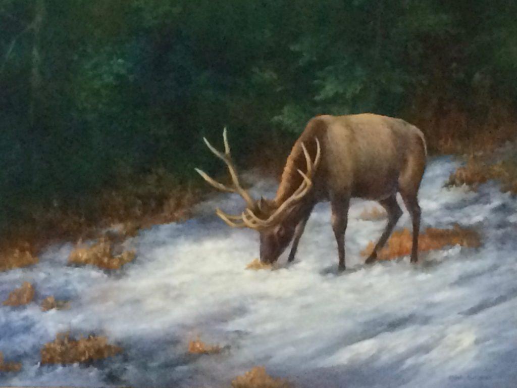 Elk in the snow, elk elk in snow cooover